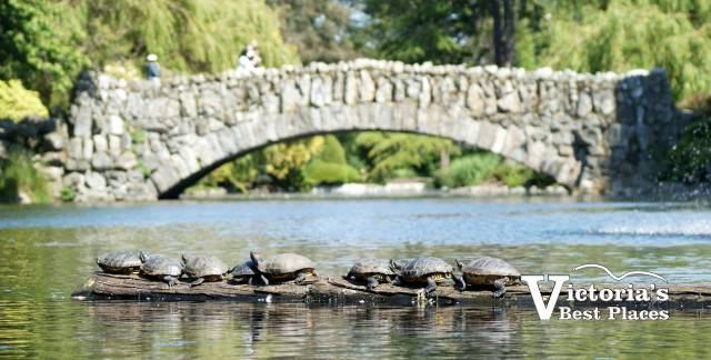 Bridge and Turtles at Beacon Hill