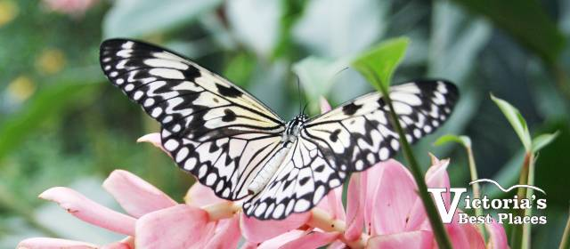 Victoria Butterfly Gardens - Victoria\'s Best Places