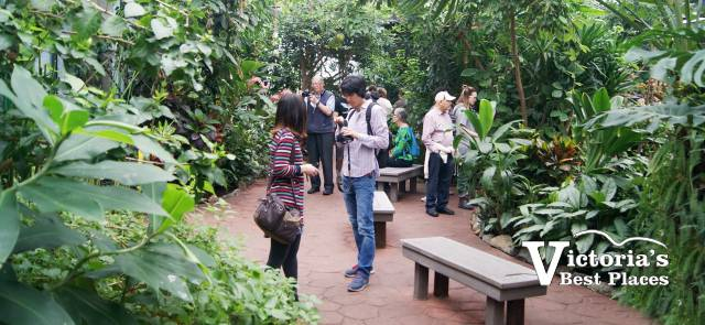 Butterfly Gardens People and Plants