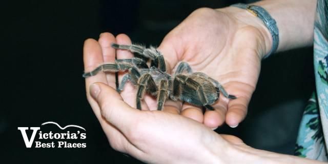 Holding a Bug Zoo Tarantula