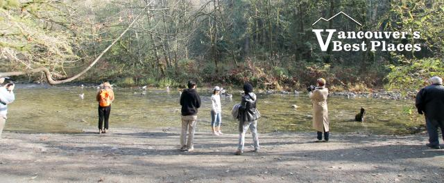 Goldstream Park Salmon Run