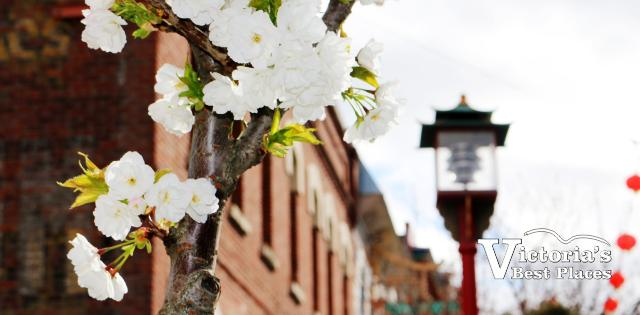 Chinatown in Spring